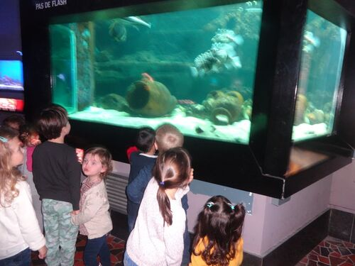 Les maternelles à l'aquarium à Liège