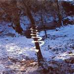 Andy Goldsworthy, Ice Spiral Treesoul