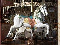 Le petit cheval blanc… et les autres !!!