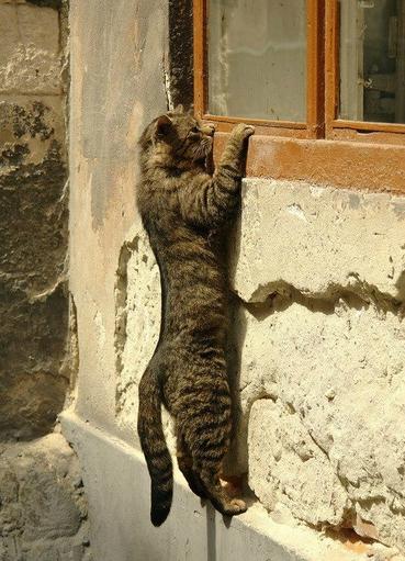 07 - Des chats en couleurs, à la fenêtre
