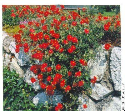 idée pour faire un rocaille - le jardin de jean marie
