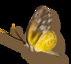 Défi 87:Chaton et papillons
