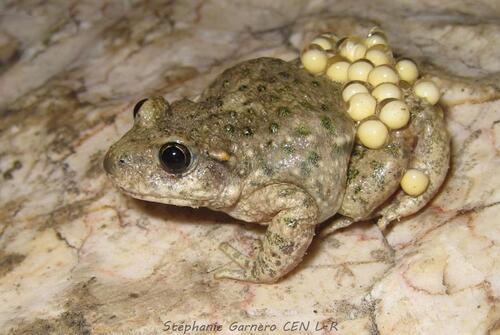 Histoires de grenouilles et de crapauds