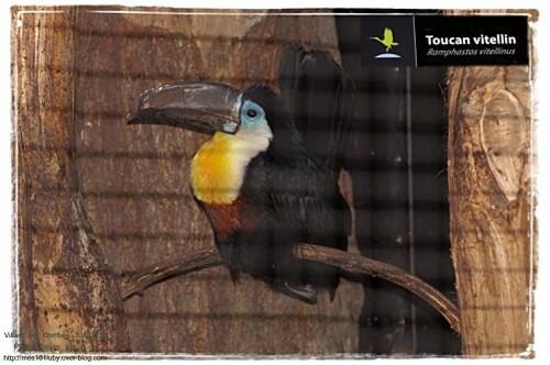 04 toucan 3