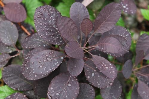 La pluie bienfaisante