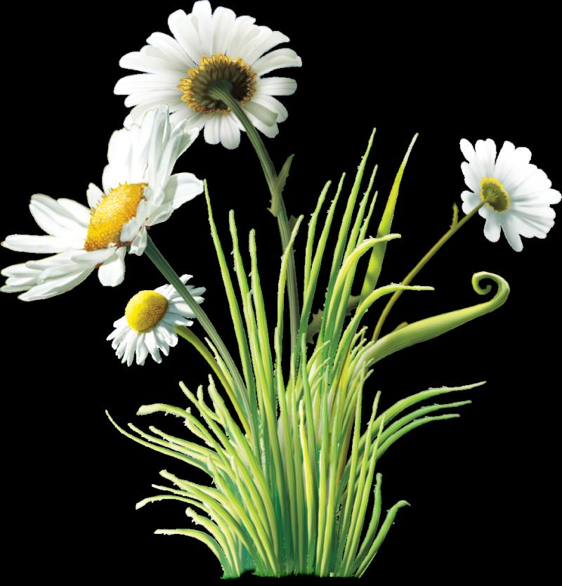 Tubes fleurs varies png servez vous carolineblue - Decorer un vase transparent ...