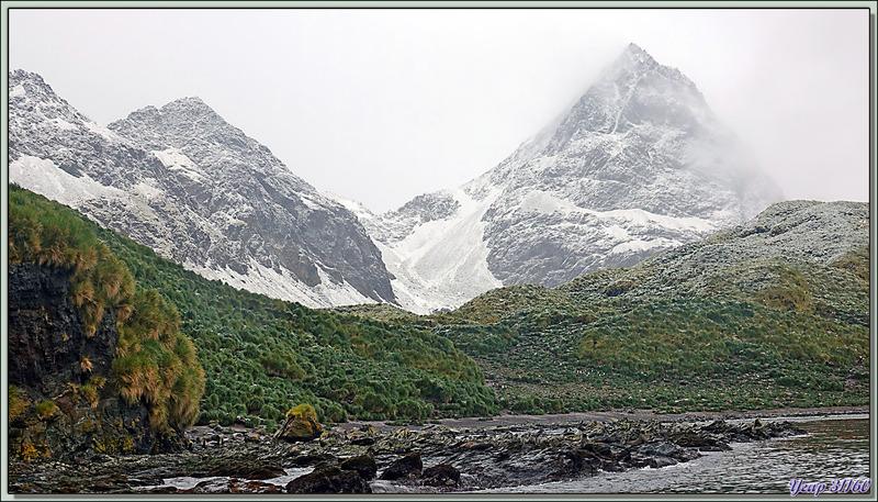 Ambiance feutrée : montagnes embrumées et saupoudrées de neige fraîche - Cooper Bay - Géorgie du Sud