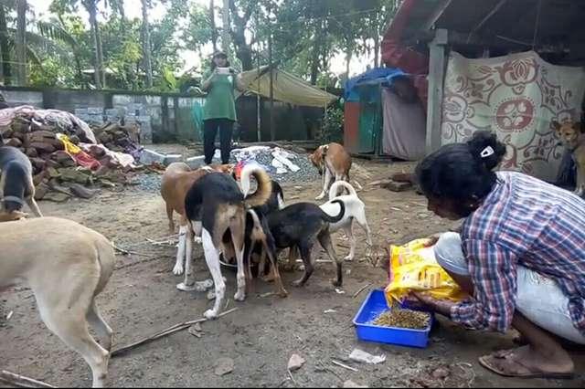(-**-)♥  Victimes de terribles inondations, ils ne voulaient pas quitter leur maison sans leurs 25 chiens