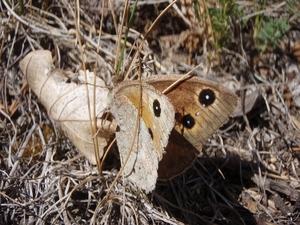 Répertoire de toutes les espèces de papillons que j'ai déjà photographiées
