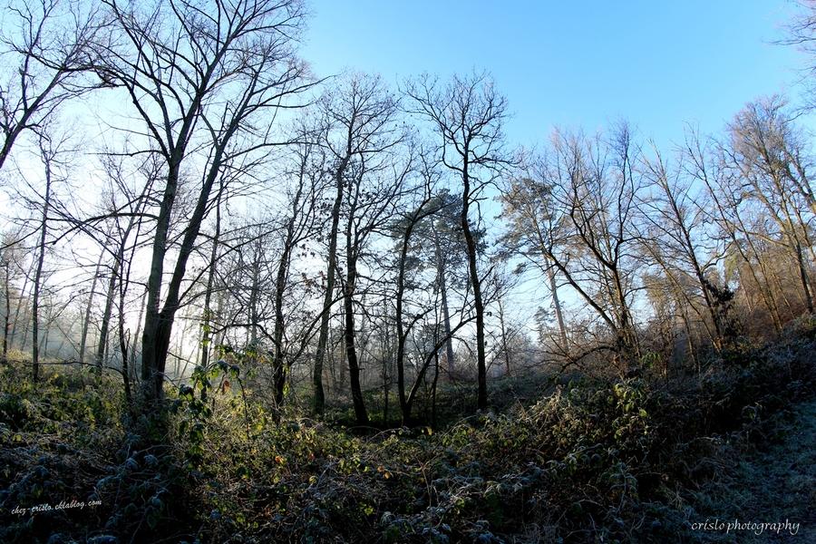 lumière forestière