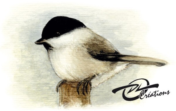 Aquarelle Oiseau Mesange