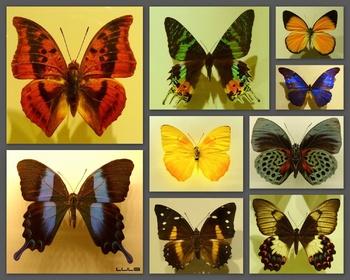 L'insectarium de Montréal