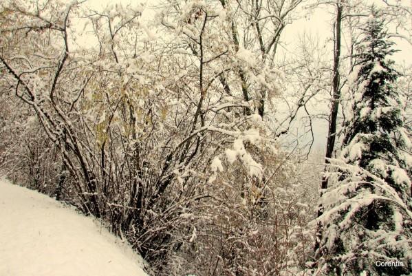 K14---Couvert-de-neige.JPG