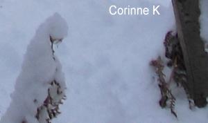 Corinne K
