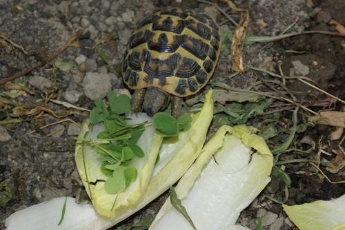 J'ai retrouvé ma tortue