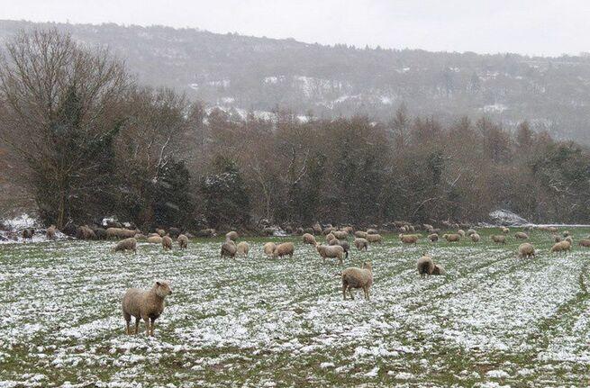 Neige Monts d'Arrée 055