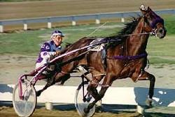 chevaux de courses 2