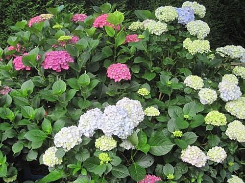 Mon-jardin 2081