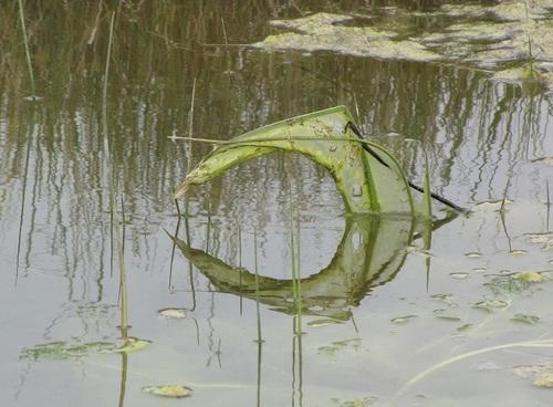 ... la nature a des idées déco...!!!