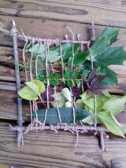 « Les tissages végétaux » (projet biodiversité)