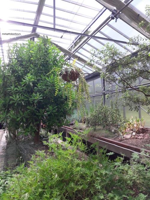 Petit tour au jardin botanique...