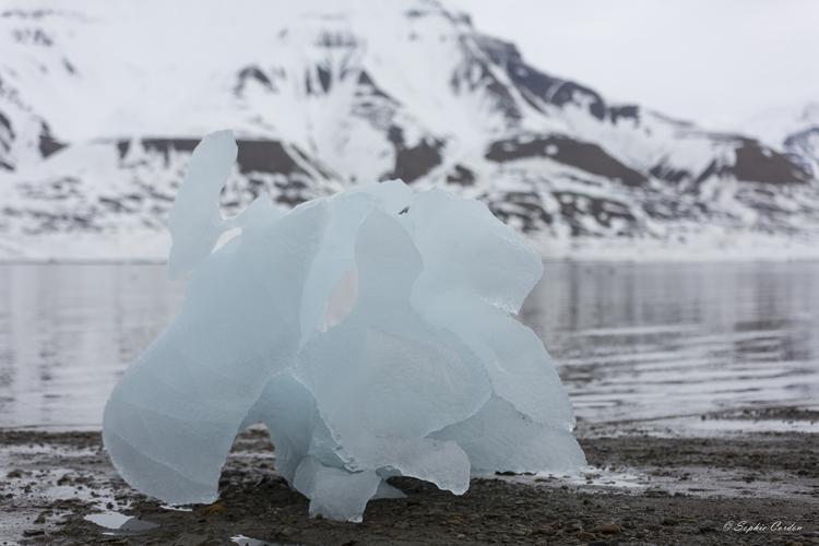 Icebergs en visite
