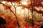 poésies d'automne