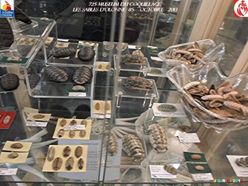 MUSEUM DU COQUILLAGE  8/16   vacances 10/ 2013  SABLES D'OLONNE    10/01/2014