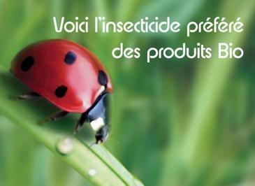 La coccinelle meilleure que les insecticides !