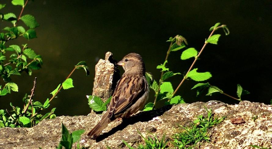 Portraits d'oiseau (4): les plus familiers
