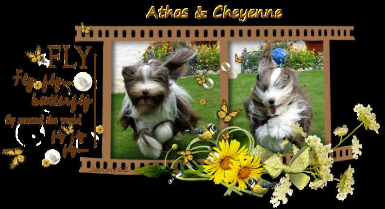 ♥  Athos & Cheyenne ♥ - photos 2ème trimestre  2014