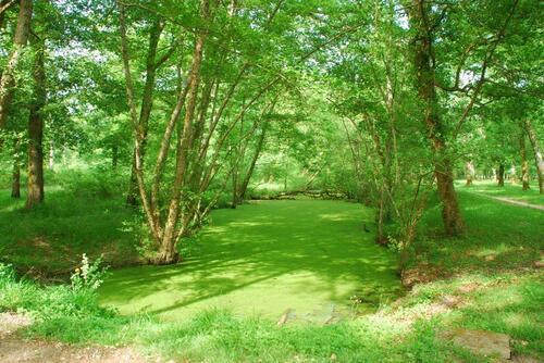 C'est super de parcourir ces petites pistes cyclables dans ce beau sous bois