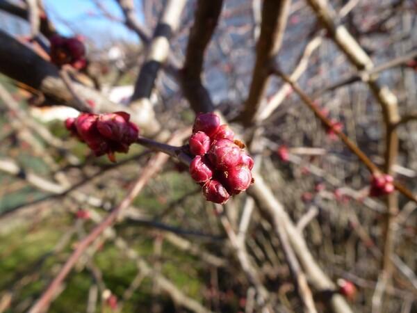 Après un avant goût de printemps, le retour de l'hiver