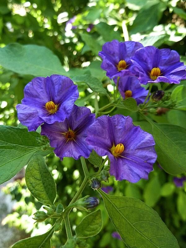 fleurs-rhodes-10.jpg