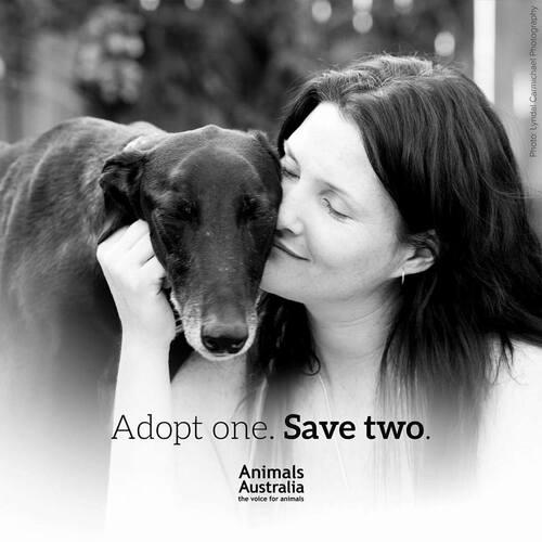 Si vous voulez aider les greyhounds, c'est le moment plus que jamais! Gros SOS