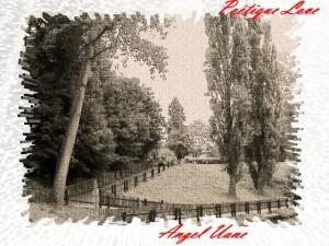 copi-noir-et-blanc-AU-2.JPG