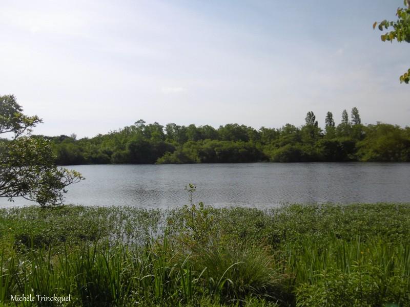 Une balade à MIMIZAN (40), au bord du Lac à la Promenade Fleurie, le 22 mai (suite)....