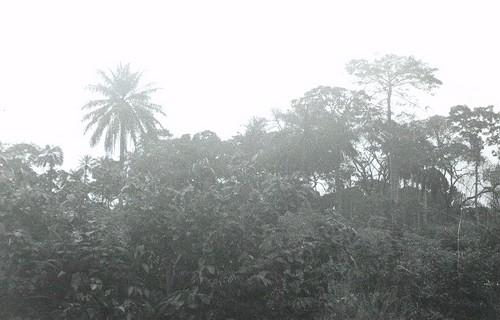 Mon Voyage en Afrique noire - 5