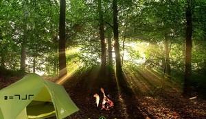 Jouer à WEG Forest escape