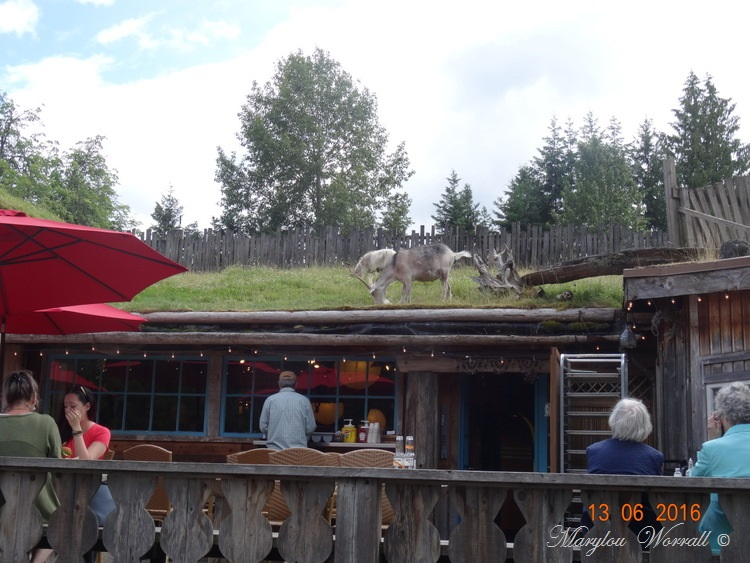 Nouvelles du Canada 110 : Goats on the Roof Market Coombs