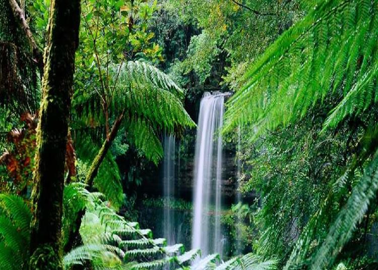 Images du monde : Tasmanie