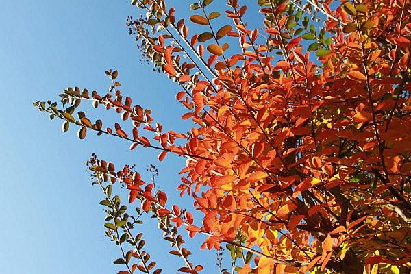 automne-2011 5672