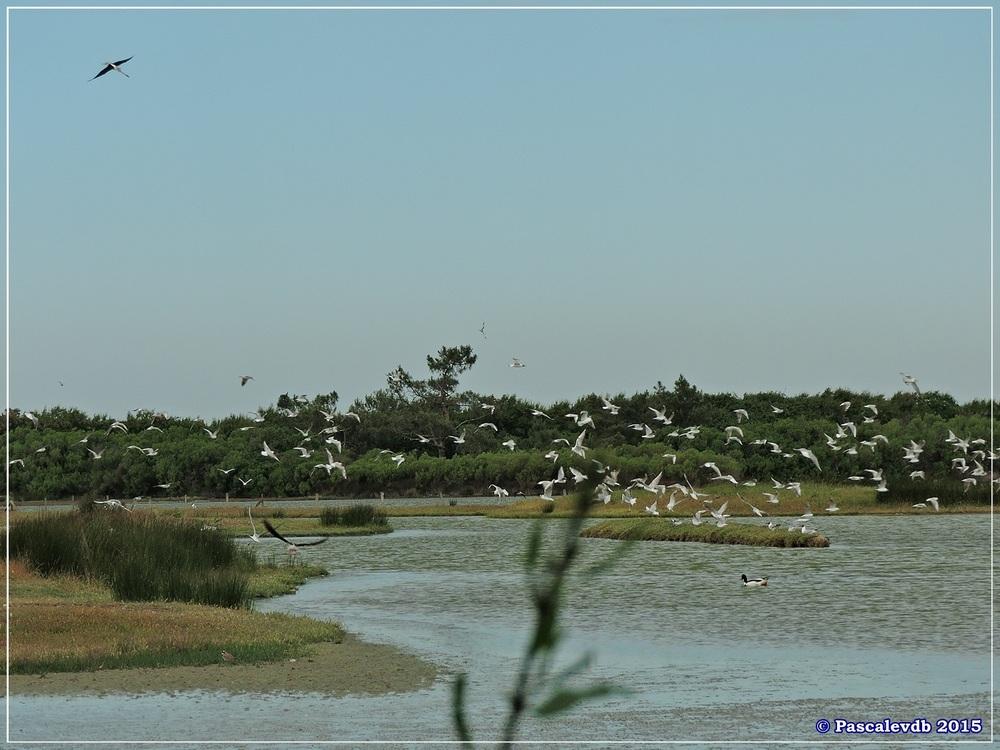 Réserve ornitho du Teich - Mai 2015 - 6/10