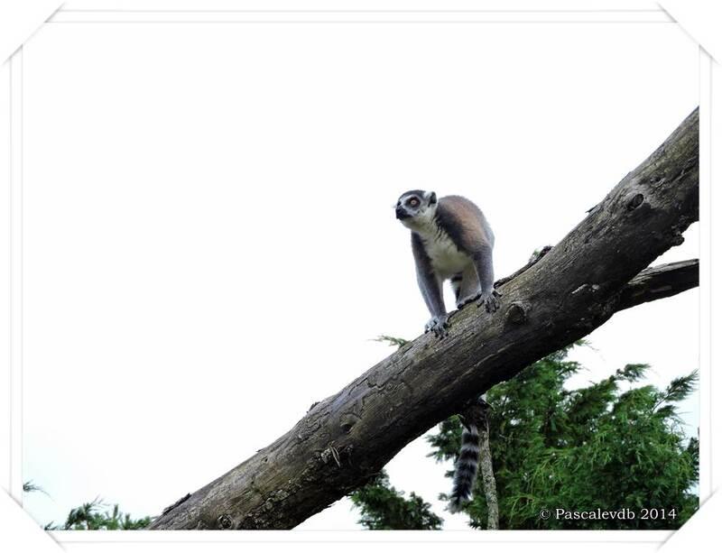Zoo du Bassin d'Arcachon à La Teste de Buch - 17/20