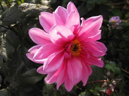 Les fleurs du samedi préférées de Jean Pierre