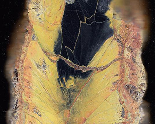 Section polie d'uranite (ou pechblende). La partie en noir est de la pechblende pure. Les hydroxydes (jaunes) d'uranium constituent l'altération de la pechblende. Echantillon poli pour l'expérience de Becquerel. Provenance : La Commanderie, Vendée, France.