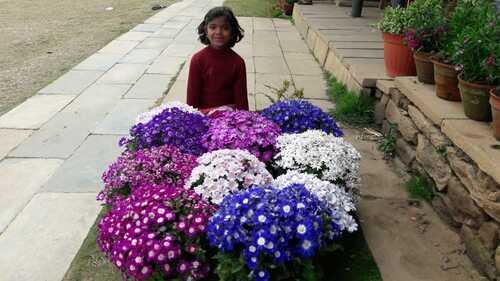 la petite nouvelle Aarati soeur de Rabin Kumar Mahato