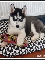 Brasko (2 mois)