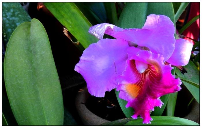 Les orchidées sauvage de Madagascar