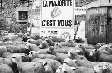 Nous les super-moutons ...
